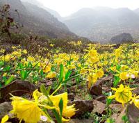La flor de Lima en Santuario del Amancay
